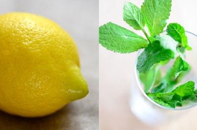 Zitrone und Minze | lacapocuoca.at