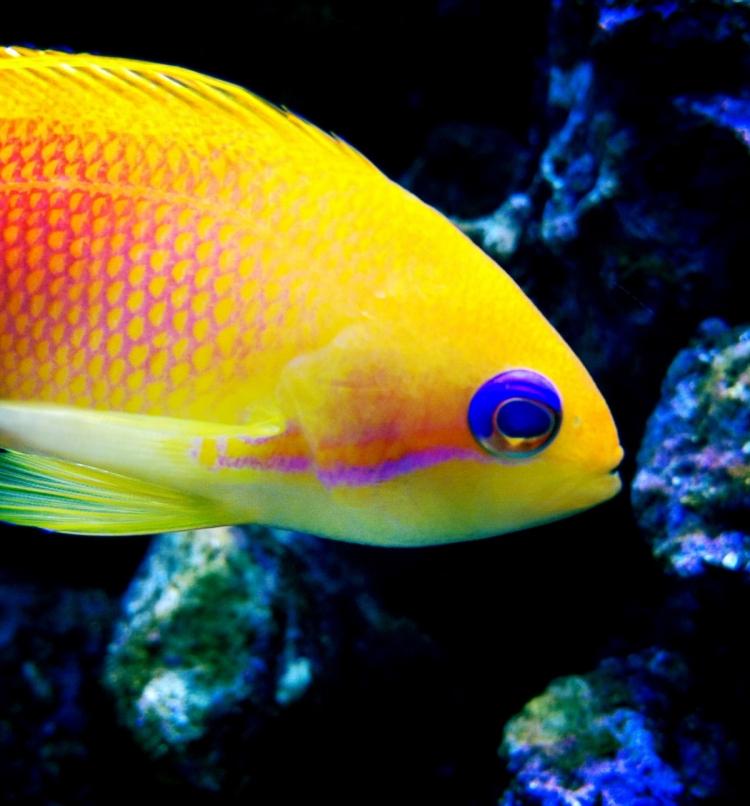 Fisch | lacapocuoca.at