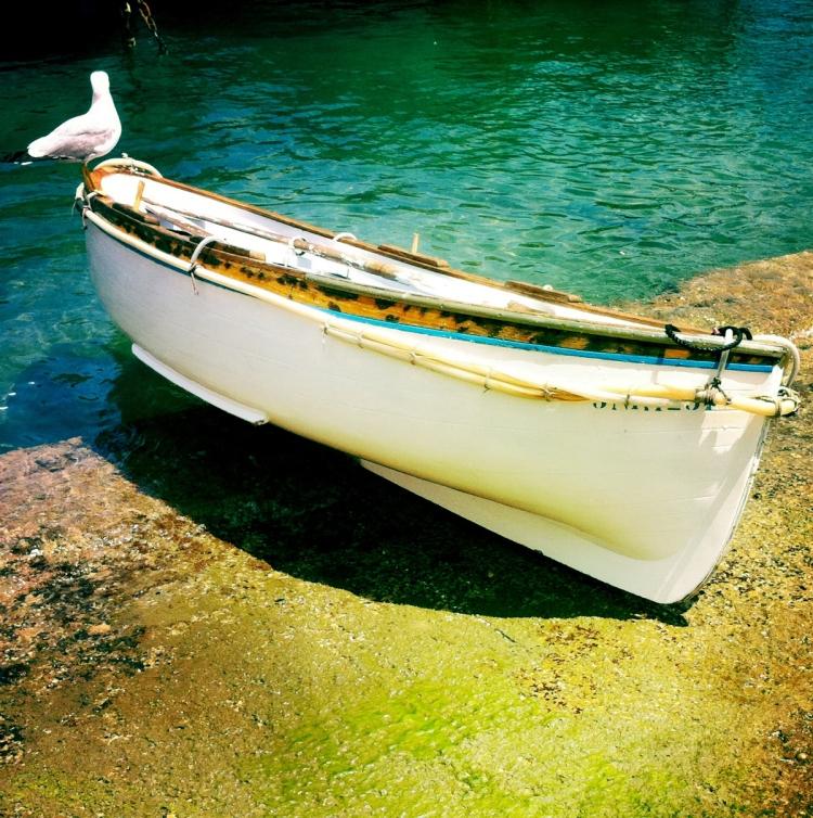 Möwe auf einem Boot | lacapocuoca.at