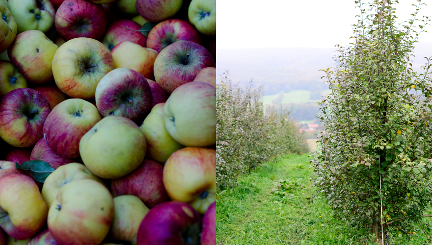 Äpfel   lacapocuoca.at