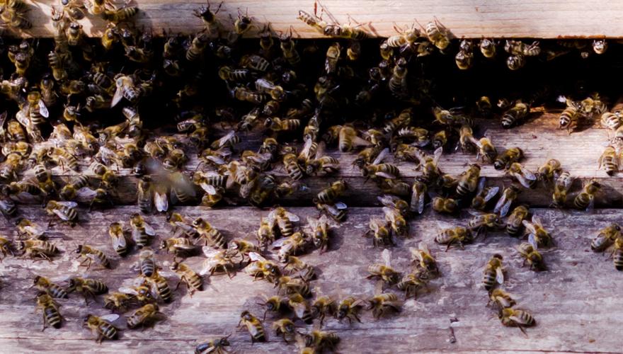 Bienen | lacapocuoca.at