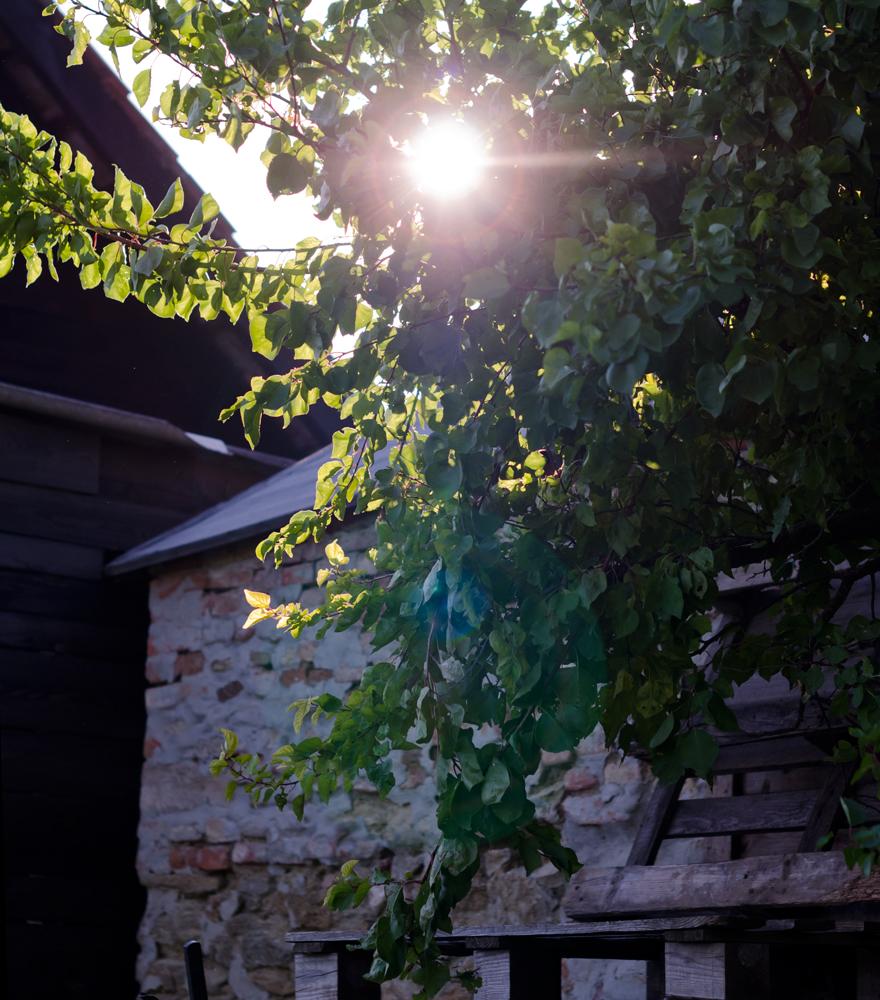 Sonne scheint durch einen Baum | lacapocuoca.at