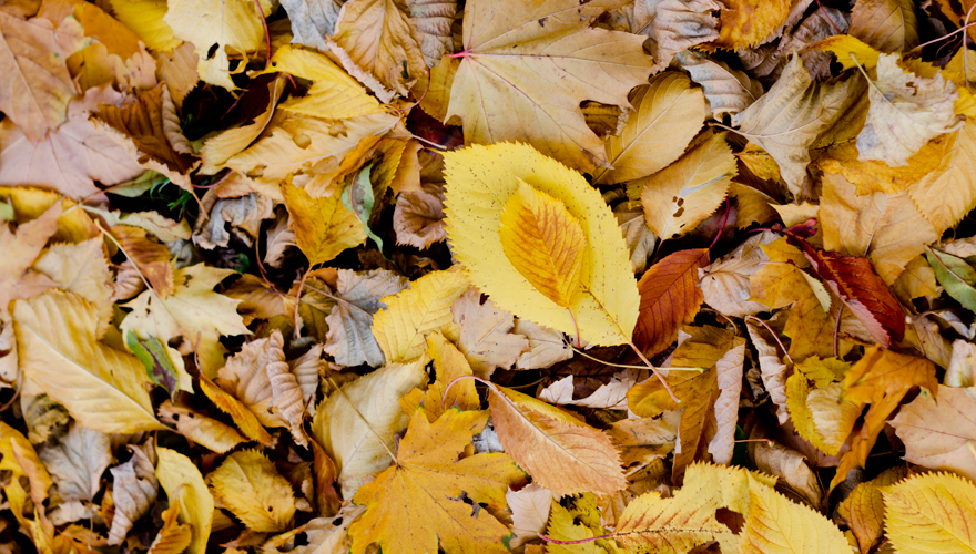 Herbstlaub | lacapocuoca.at
