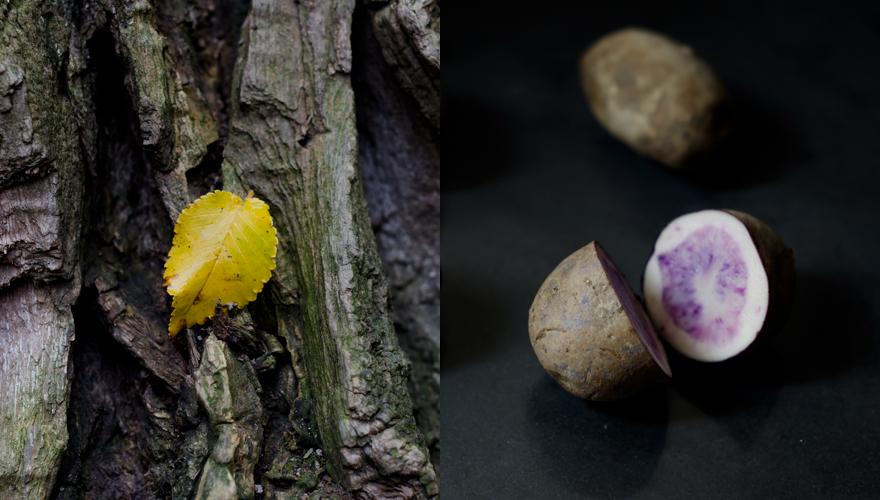 Kartoffel | lacapocuoca.at
