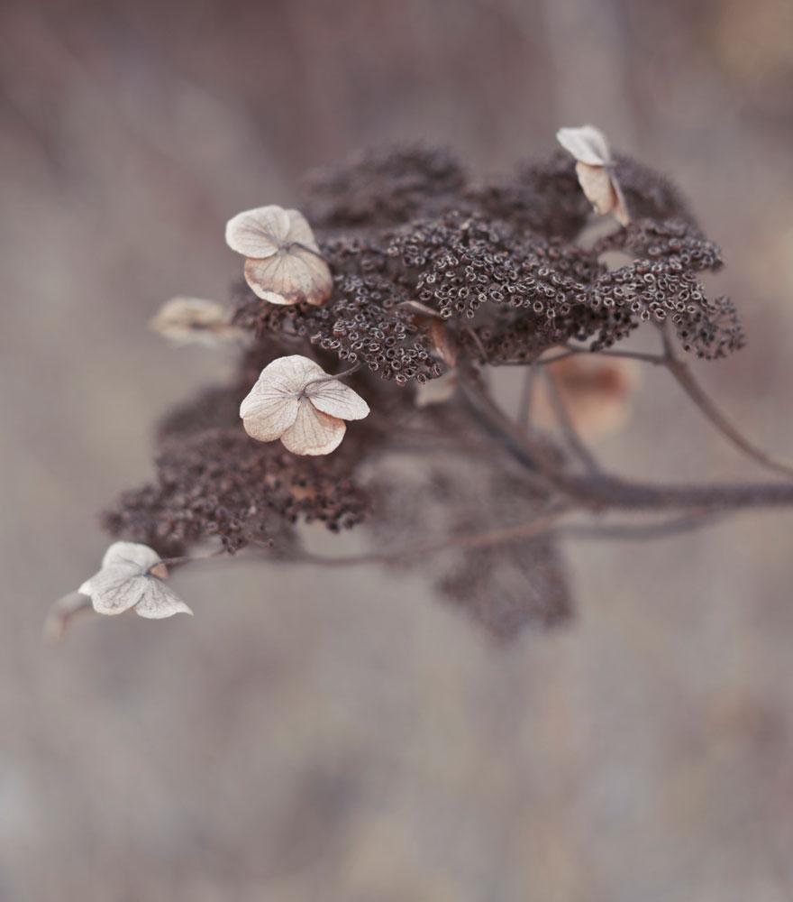 Blüte | lacapocuoca.at