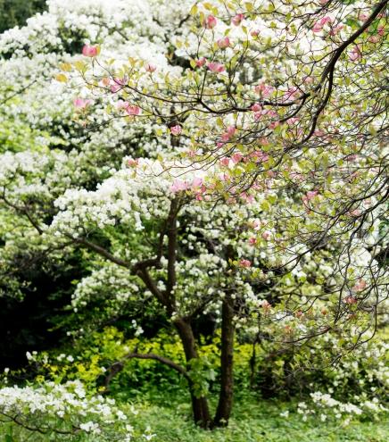 Botanischer Garten | lacapocuoca.at
