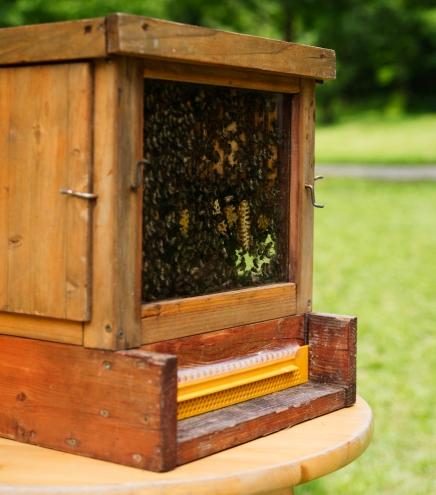 Bienenstock | lacapocuoca.at