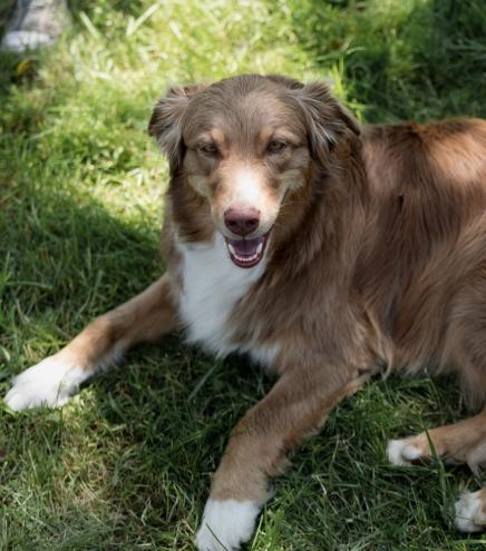 Hund | lacapocuoca.at