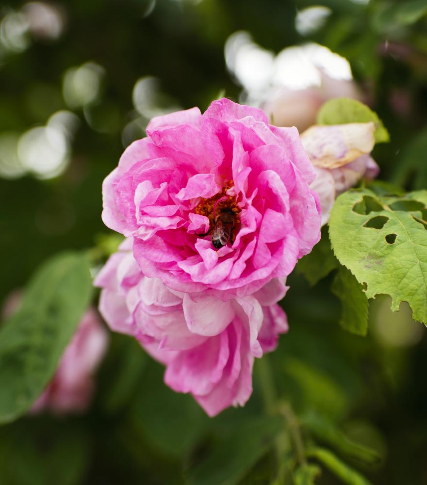 rosenbiene-Expo