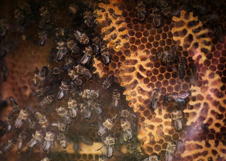 Bienenwaben | lacapocuoca.at