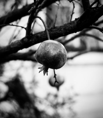 Granatapfel | lacapocuoca.at