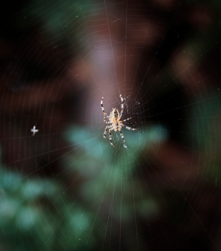 Spinne | lacapocuoca.at