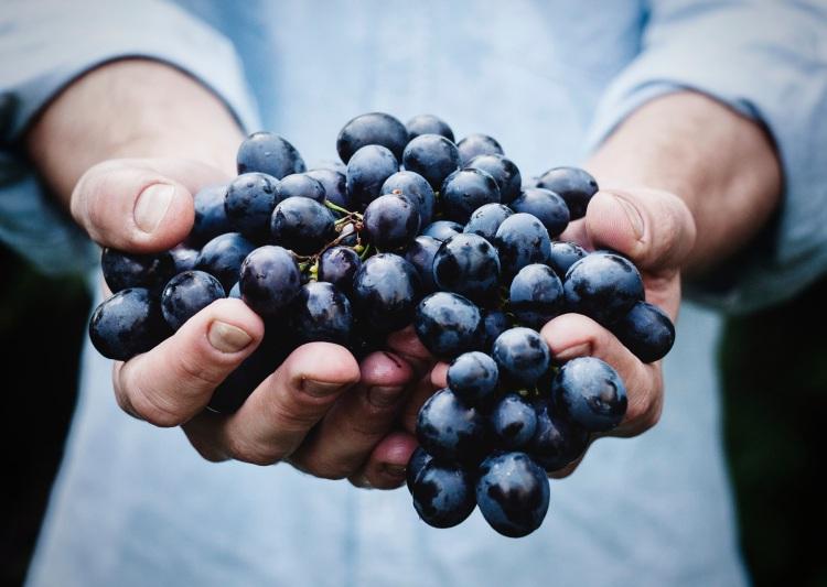 Weintrauben | lacapocuoca.at