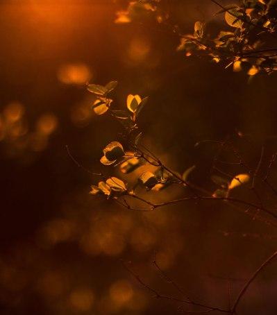 Blätter | lacapocuoca.at