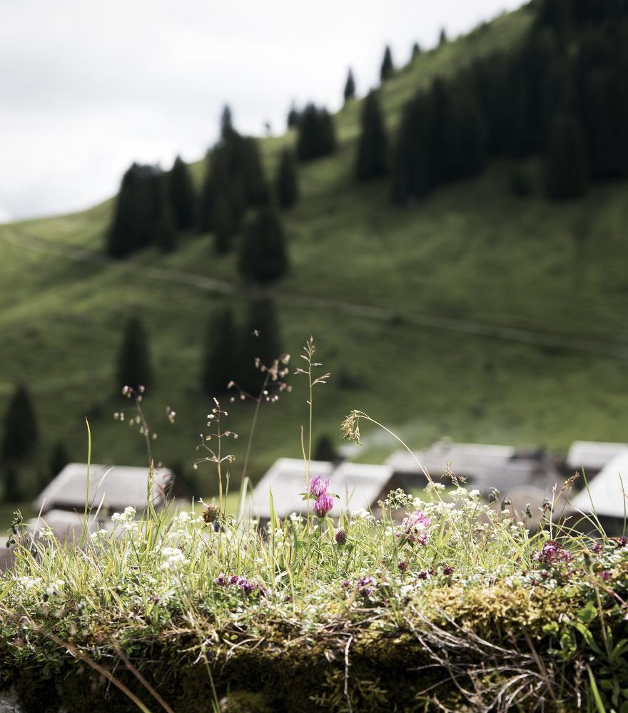 Alpe Steris | lacapocuoca.at