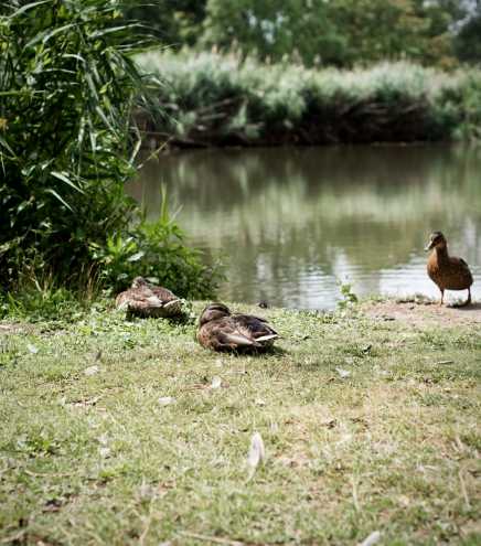 Enten | lacapocuoca.at
