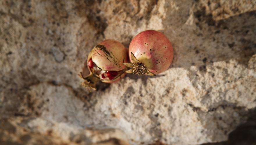 granatapfel-ex