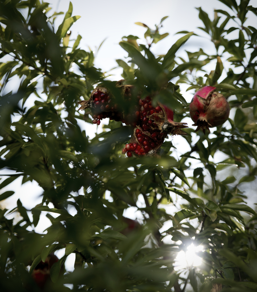 granatapfel2-ex