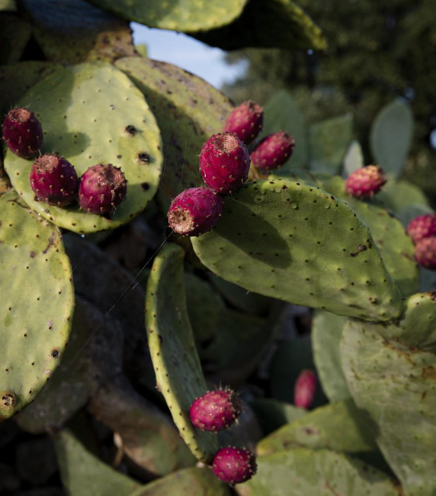 kaktus-ex